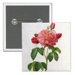 Rosa Gallica Aurelianensis Pin Cuadrado