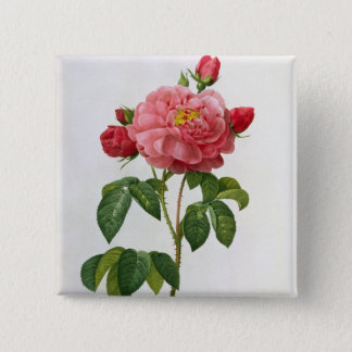 Rosa Gallica Aurelianensis Pinback Button