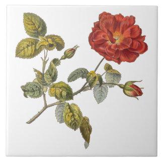 Rosa Gallica Beautiful Red Antique Vintage Rose Ceramic Tiles