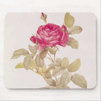 Rosa Gallica Pontiana, from 'Les Roses' Mouse Pad