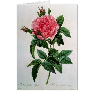 Rosa Gallica Regallis Greeting Card