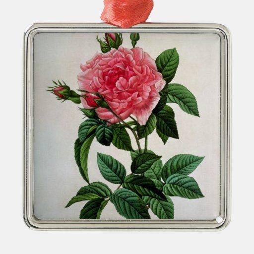 Rosa Gallica Regallis Metal Ornament