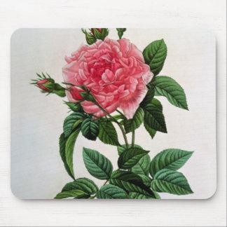 Rosa Gallica Regallis Mouse Pad