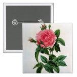 Rosa Gallica Regallis Pin Cuadrada 5 Cm