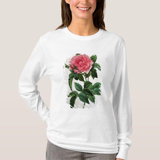 Rosa Gallica Regallis T-Shirt