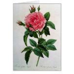 Rosa Gallica Regallis Tarjeton