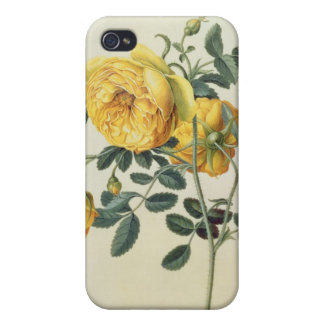 Rosa hemispherica, 18th century iPhone 4/4S cases