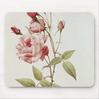 Rosa Indica Vulgaris, from 'Les Roses' Mouse Pad