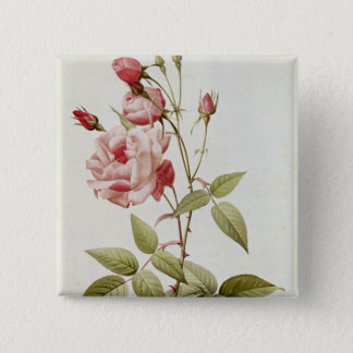 Rosa Indica Vulgaris, from 'Les Roses' Pinback Button