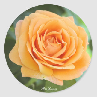 Rosa Looping Classic Round Sticker