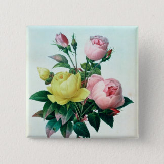 Rosa Lutea and Rosa Indica Pinback Button