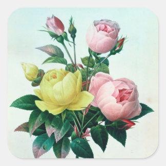 Rosa Lutea y Rosa Indica Pegatina Cuadrada