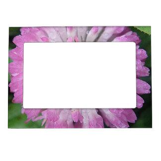 Rosa magnético Kleeblüte del marco del espectro Marcos Magneticos Para Fotos