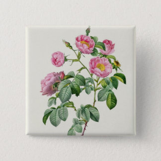 Rosa Mollissima, from 'Les Roses' Button