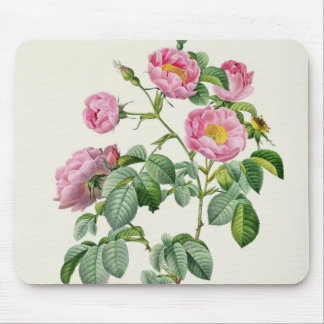 Rosa Mollissima, from 'Les Roses' Mouse Pad