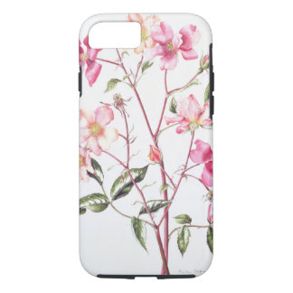 Rosa 'Mutabilis' 1996 iPhone 7 Case