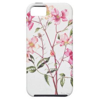 Rosa 'Mutabilis' 1996 iPhone SE/5/5s Case