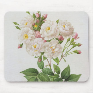 Rosa Noisettiana, from'Les Roses' Mouse Pad