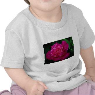 Rosa Peace del rosa de té híbrido hermoso ' Camisetas