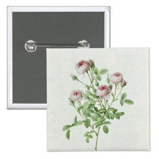 Rosa Pomponia, de los 'rosas de Les Pin Cuadrado