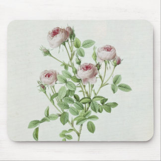 Rosa Pomponia, from 'Les Roses' Mouse Pad