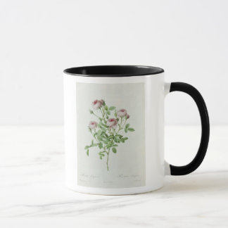 Rosa Pomponia, from 'Les Roses' Mug