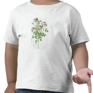 Rosa Pomponia, from 'Les Roses' Tee Shirt