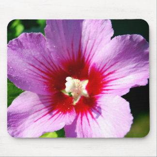 Rosa púrpura oscuro del mousepad de Sharon Tapete De Ratones