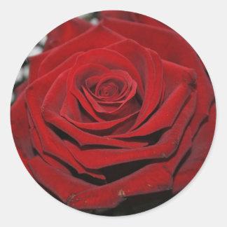 Rosa roja - bordadores pegatina redonda