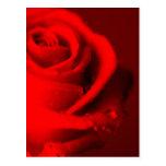 Rosa roja tarjeta postal