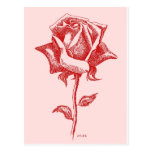 Rosa rojo 16.jpg postal