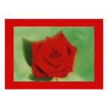 rosa rojo 1 comunicado