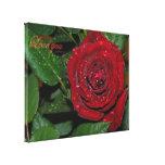 Rosa rojo #2 lienzo envuelto para galerías