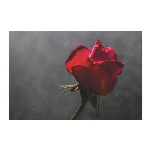 """Rosa rojo, ~ 60"""" x 40"""" - EXTRA GRANDE Impresión De Lienzo"""