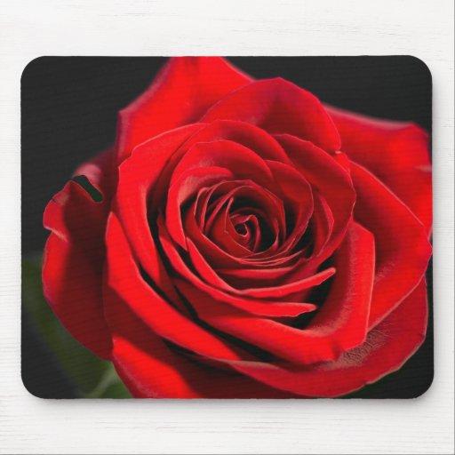 Rosa rojo alfombrilla de raton