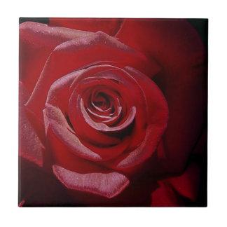 Rosa rojo aumentado Digital en la plena floración Azulejos