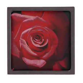 Rosa rojo aumentado Digital en la plena floración Caja De Regalo De Calidad