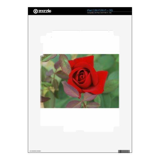 Rosa rojo brillante iPad 2 skins