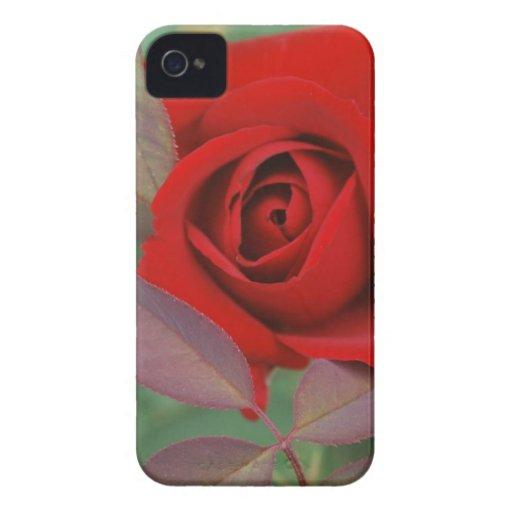 Rosa rojo brillante iPhone 4 cárcasas