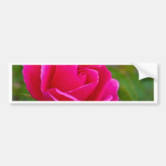 Rosa rojo pegatina para auto