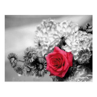 Rosa rojo con el fondo blanco y negro postal