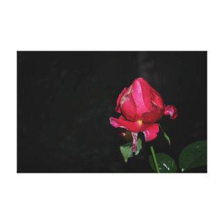 Rosa rojo con las gotas de agua, en la lluvia lona estirada galerías