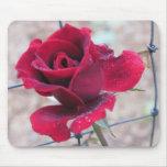 Rosa rojo con rocío tapetes de ratón