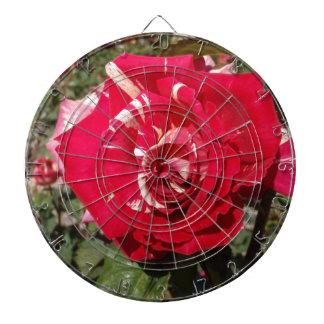 Rosa rojo con un chapoteo de la crema tablero dardos