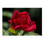 Rosa rojo de Brillant Tarjeta Postal