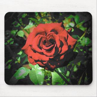 Rosa rojo de la plena floración alfombrilla de ratones