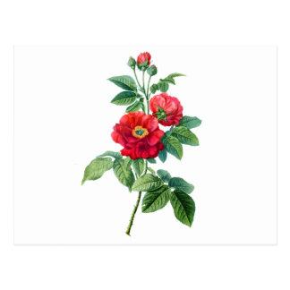 Rosa rojo de la provincia tarjetas postales