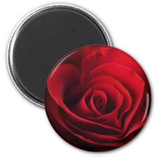 Rosa rojo de la tarjeta del día de San Valentín Imanes