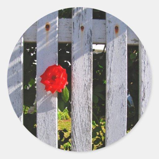 Rosa rojo de la valla de estacas blanca pegatina redonda