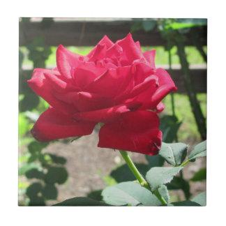 """""""Rosa rojo del saludo de la mañana"""" Azulejo Cuadrado Pequeño"""